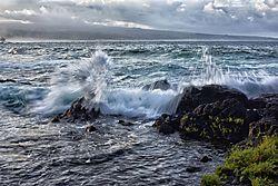 SURF_1316a.jpg