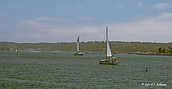 Sail-Boating-of-of-Harbor-Island-PPW.jpg