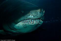 Sandhai_Aquarium-072-DSC_7086.jpg