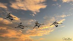 Sandhill_Cranes_at_Sunset.jpg