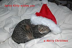 Santa_Kitty.jpg
