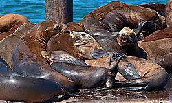 Sea-Lions-in-Morro-Bay-PPW.jpg