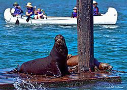 Sea-Lions-in-Morrow-Bay-2-PPW.jpg