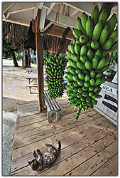 Sea-Side-Bananas.jpg