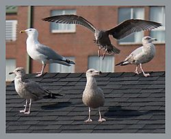 Seagulls-Landing.jpg