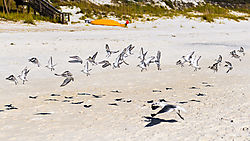 SeagullsAlys_Beach.jpg