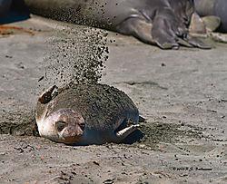 Seal-Applying-Sunscreen-PPW.jpg
