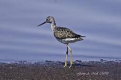Shore_bird.jpg