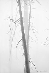 Silhouettes_in_Fog_1_Yosemite_copy.jpg