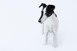 Snow_Cricket_for_Nikonians.jpg