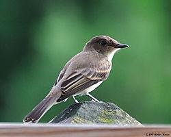 Sparrow_On_The_Porch_2.jpg