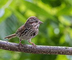 Sparrow_rework.jpg