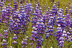 Spring-Flowers-1.jpg