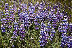 Spring-Flowers-4.jpg