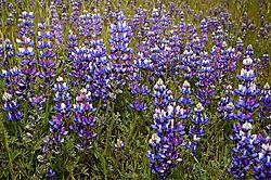 Spring-Flowers-5.jpg