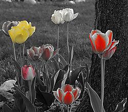 Spring_flowers.jpg