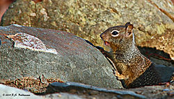 Squirrel-On-The-Rocks-PPW.jpg