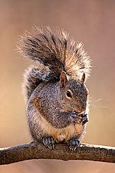 Squirrel-WEB1.jpg