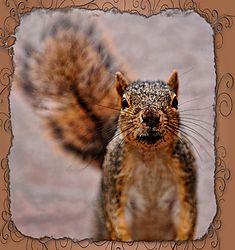 Squirrel-frame.JPG