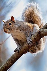 Squirrel-web.jpg