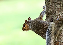 Squirrel_4.jpg