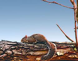 Squirrel_HDR3.jpg