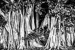 StrangeTrees_DSC2766.jpg