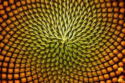 Sunflower-middle.jpg