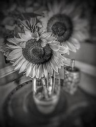 Sunflower_in_B_W.jpg