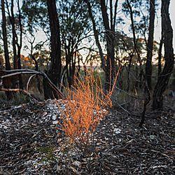 Sunset_Bush_Lightning_Hill_Eaglehawk-0071.jpg