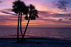 Sunset_lillies-33.jpg