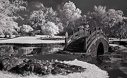 THE_BRIDGE3.jpg