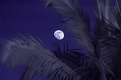 THE_MOON_and_PALM_FRONDS.jpg