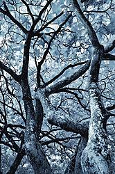 TREES_1126.jpg