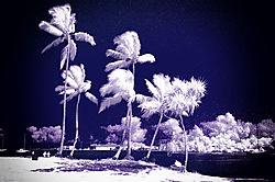 TREES_REEDS_BAY_0028.jpg