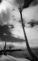 TREES_SKY_CLOUDS.jpg