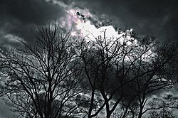 TREES_and_STORM_CLOUDS.jpg