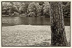 TREE_AND_LAKE_.jpg