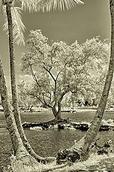 TREE_REEDS_BAY_0051.jpg