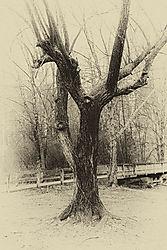 TREE_and_WALKWAY1.jpg