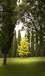 TUSCAN_VILLA_TREE_TUSCANY_ITALY_V_12_09_8924LR.jpg