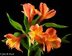 Table_Top_Flowers-Georgia_O_Keeffe_Style.jpg