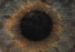 The_All_Seeing_Eye.jpg