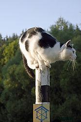 The_Cat_3.jpg