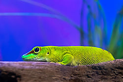 The_Green_Lizzard-3.jpg