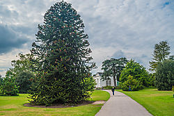 The_Orangery_Kew_Gardens.jpg
