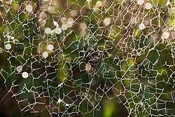 The_Web_We_Weave.jpg