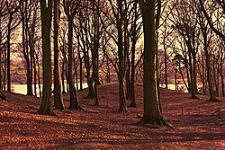 The_Wood_Walk_Talkin_Tarn.jpg