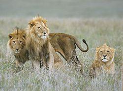 Three_brothers1.jpg