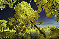 Tilted_Tree_at_the_Lagoon-1.jpg